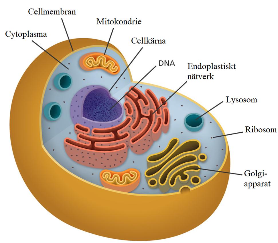 vad är en cell