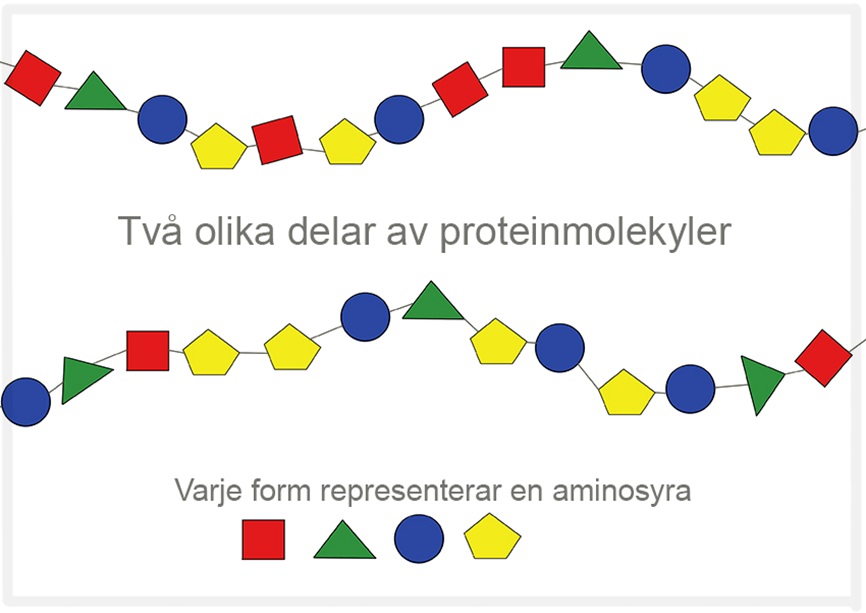 aminosyror