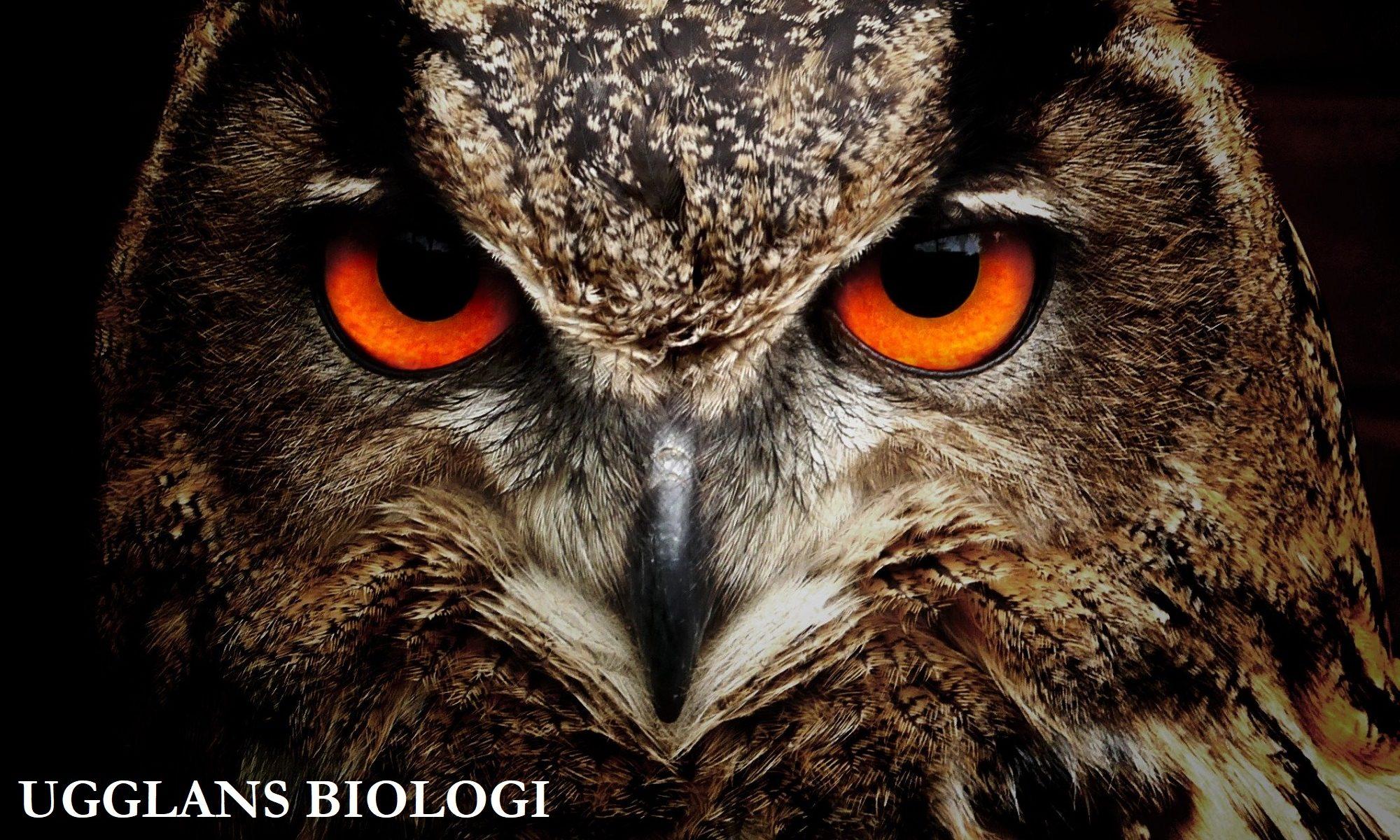 Ugglans Biologi